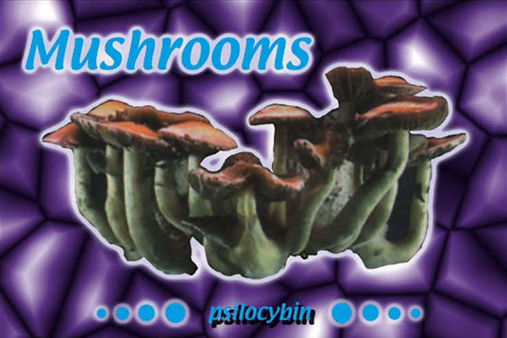 magic-mushrooms